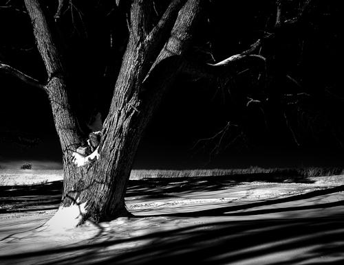 tree_bw_hdr